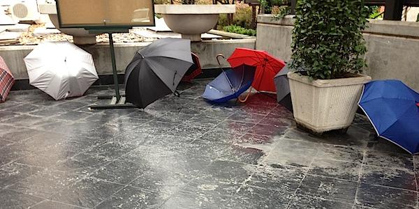 Paraplyn på tork utanför Botaniska trädgårdens forskarhus i Madrid, mars 2013.