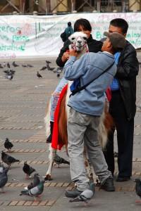 Söndagsnöje på Plaza de Bolivar, Bogota