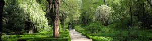 Botaniska trädgården i Madrid